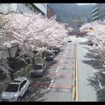 벚꽃핀 대학 ㅈㅓㅇㅁㅜㄴ ㄷㅡㄹㅇㅓㅇㅗㄴㅡㄴ 드론 영상 (4K)