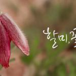 할미, 꽃