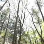 2018 IFS2  11팀  - 숲