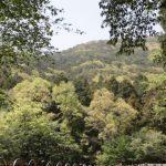 2018 IFS2  12팀 -  대신공원 뒷 산