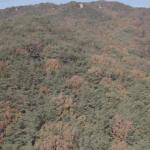 북구 대천천 애기소 계곡 16